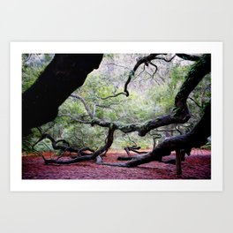 Angel Oak 1 Art Print
