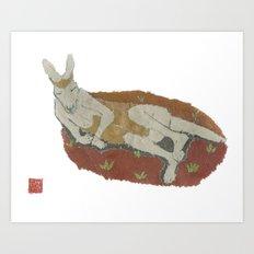 Kangaroo, Animals, Wildlife Art Print