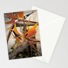 Paradise Found Stationery Cards