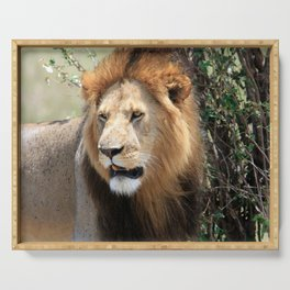African Male Lion Serving Tray