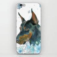 doberman iPhone & iPod Skins featuring Blue Doberman by Parmelyn