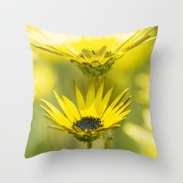 The beauty of yellow daisies Throw Pillow