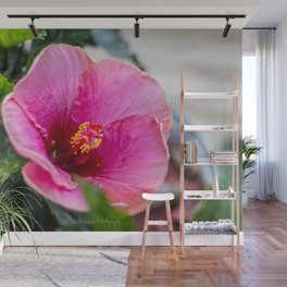Large Pink Hibiscus Wall Mural
