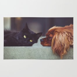 CAT - DOG - LYING - DOWN - ANIMALS - FRIENDS - PHOTOGRAPHY Rug