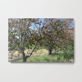 Wild Cherry Farm Metal Print