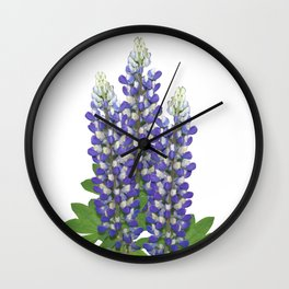 Blue and white lupine flowers Wall Clock