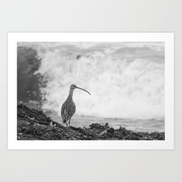 The Curlew Art Print