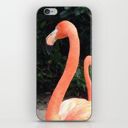 Flamingo Flair iPhone Skin