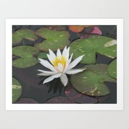 Calm Reflections Art Print