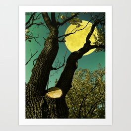 Crooked oak  Art Print