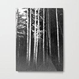 Birch Lines Metal Print