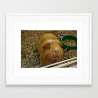 guinea pig Framed Art Prints featuring Guinea Pig by a person