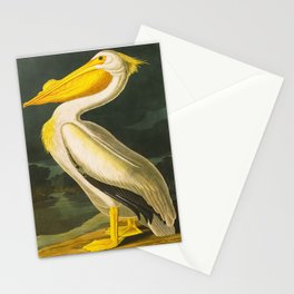 White Pelican John James Audubon Scientific Vintage Illustrations Of American Birds Stationery Cards
