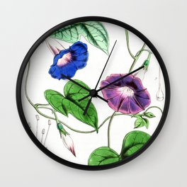 A Purging Pharbitis Vine in full blue and purple bloom - Vintage illsutration Wall Clock