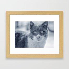 Cold Cat Framed Art Print