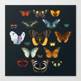 Entomology Vintage Butterfly Canvas Print
