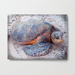 Cute, fun Hawaii sea turtle relaxing on the beach close-up photo Metal Print