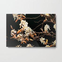 Blooming Spring Flowers Metal Print