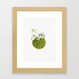 Kokedama 2 Framed Art Print