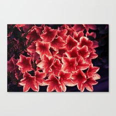 Beautiful unknown flowers :) Canvas Print
