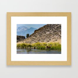 Hot Creek Deer Framed Art Print