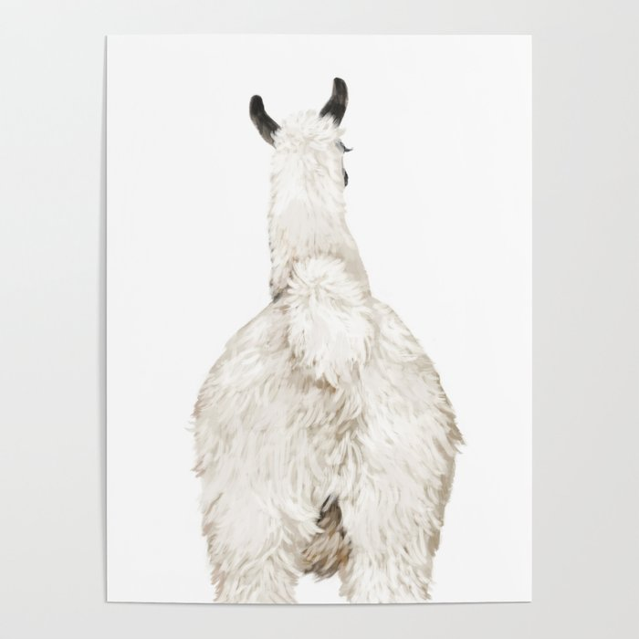 Llama ass