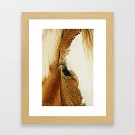 Fly In The Eye Framed Art Print