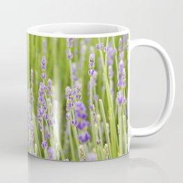 Lovely Lavender Field Coffee Mug