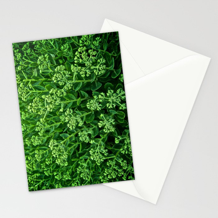 Beautiful Green Pattern - The Peace Collection Stationery Cards