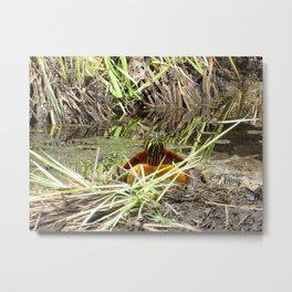 PAINTED TURTLE - COMING OUT OF THE DEPTHS! Metal Print