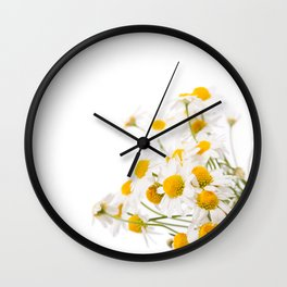 Many white flowerheads of chamomile bunch Wall Clock