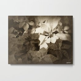 Mixed color Poinsettias 1 Antiqued Metal Print