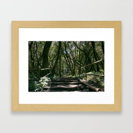 The epmty path in forest Framed Art Print