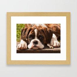 Alfie I Framed Art Print