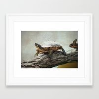turtle Framed Art Prints featuring turtle by Tanja Riedel