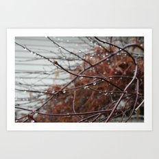 Rain photography, a Photo of a red bush covered in raindrops, It's sure rains in Washington state! Art Print