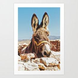 Donkey photo Art Print