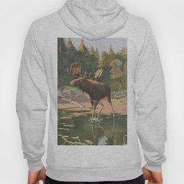 Vintage Moose Illustration (1902) Hoody