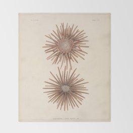 Naturalist Sea Urchins Throw Blanket