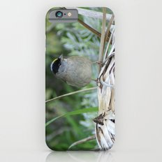 Golden-crowned Sparrow iPhone 6s Slim Case