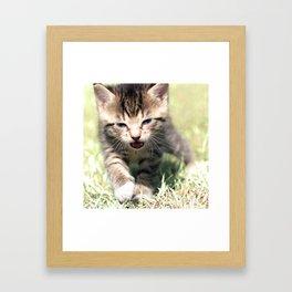 Katze, Cat Framed Art Print