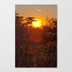 flower sunset  Canvas Print