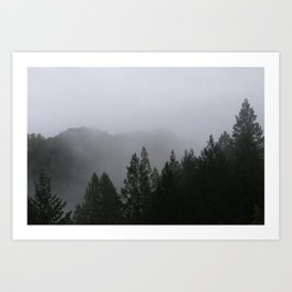 Fog over Redwoods Art Print