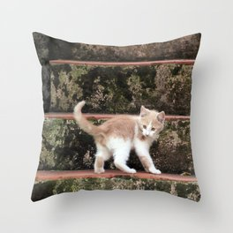 Cute Kitten Playing on the Stairs Throw Pillow