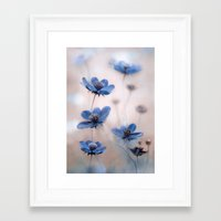 cosmos Framed Art Prints featuring Cosmos by Mandy Disher