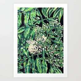 elderberry Art Print
