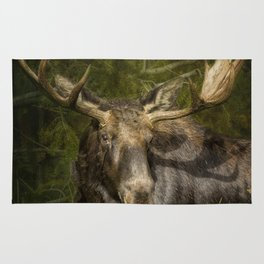 The Bull Moose Rug