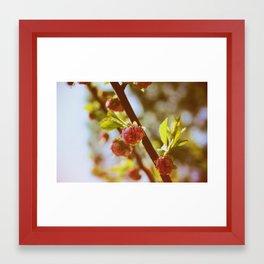 almonds in april Framed Art Print