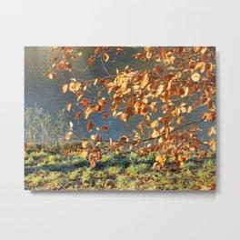 Late autumn leaves Metal Print