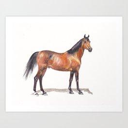 Arabian Show Art Print